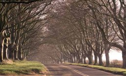 Beech avenue near Badbury Rings